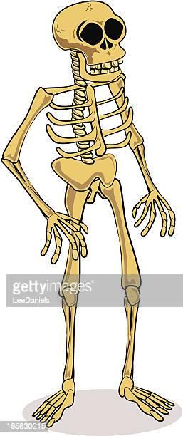Skelett Comic