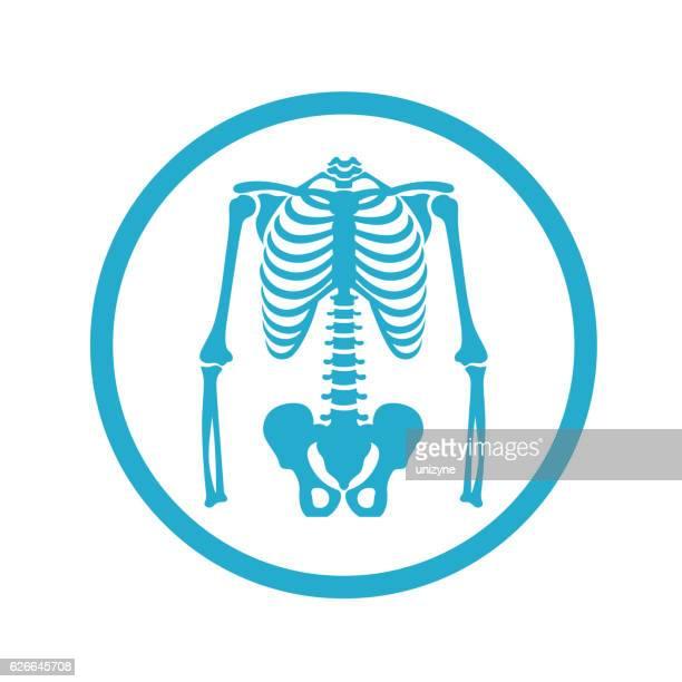 ilustraciones, imágenes clip art, dibujos animados e iconos de stock de icono de skeleton - esqueleto humano