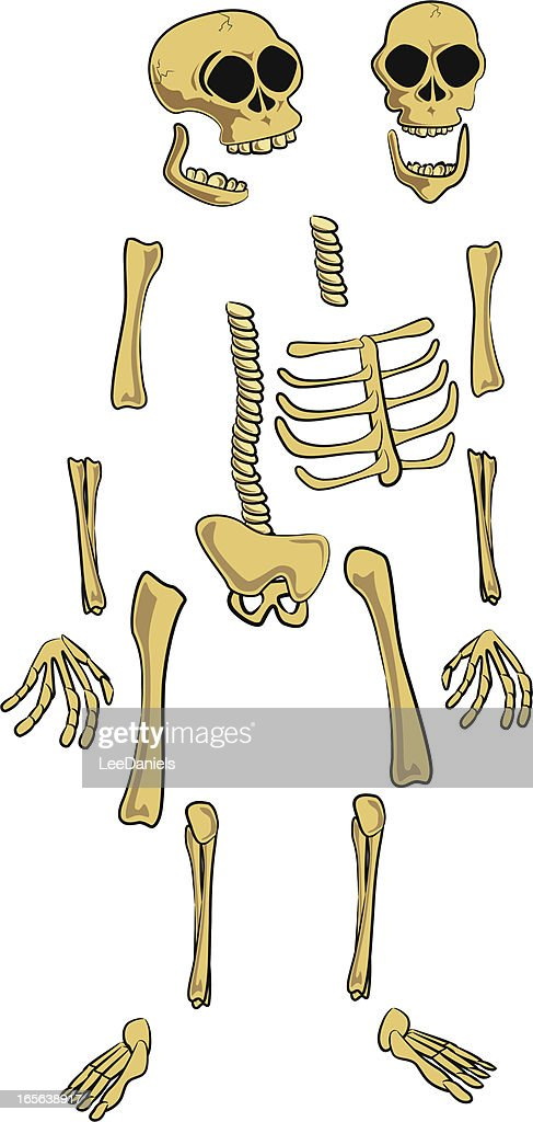 Skeleton Parts Cartoon Custom Posing stock illustration