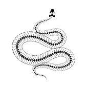 Skeleton snake isolated on white background.