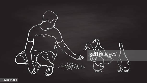 skeptical ducks hand feeding - duck bird stock illustrations, clip art, cartoons, & icons