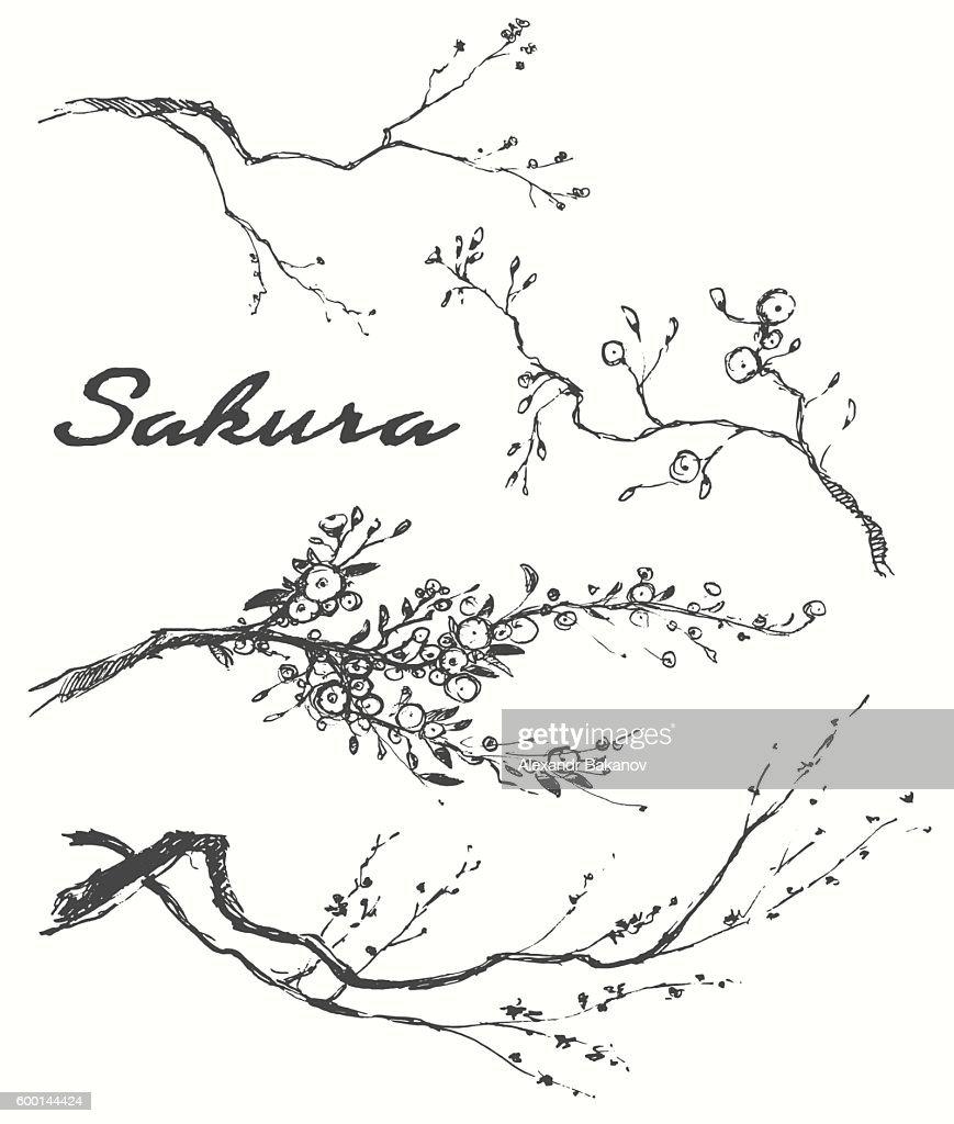Sketch branch sakura flowers vector illustration.