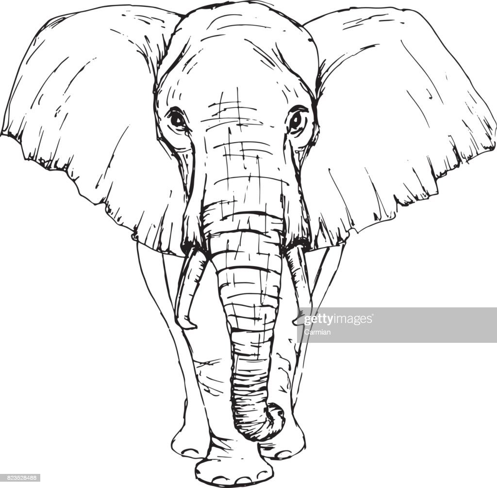 Sketch by pen African elephant front view