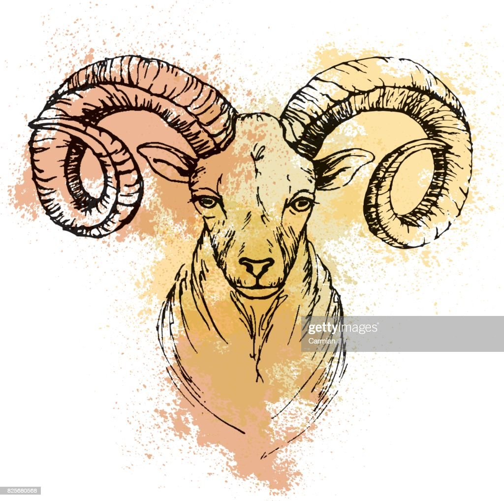 Sketch by pen of a mountain goat  head  on a background of colored watercolor stains