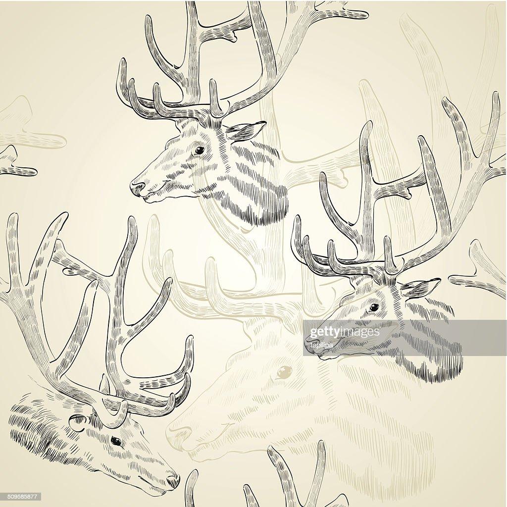 Sketch deer