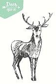 Sketch deer vintage illustration hand drawn vector