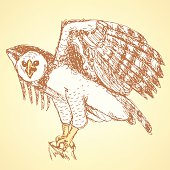 Sketch harpia bird head in vintage style