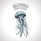sketch isolated jellyfish