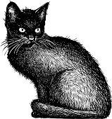 sketch of a black kitten