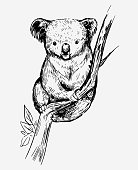 Sketch of a koala bear. Hand drawn sketch converted to vector