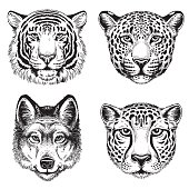Sketch of wild animal faces