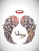 sketch of wings