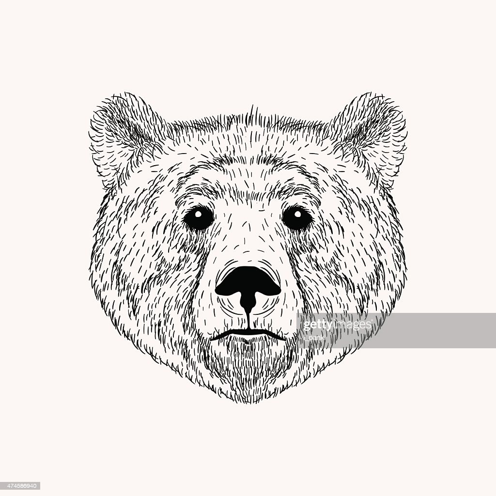 Sketch realistic face Bear. Hand drawn vector  illustration