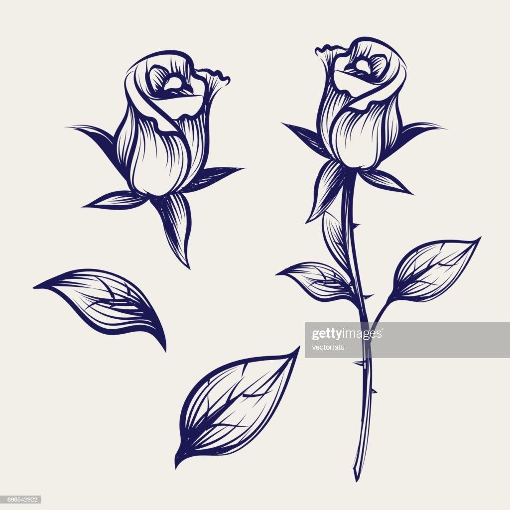 Sketch rose flower, bud and leaves