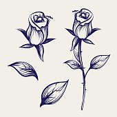 Sketch rose flower, bud and leaves
