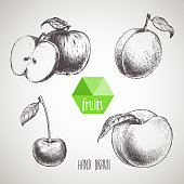Sketch style fruits set. Apple, apricot,cherry, peach