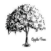 Sketch tree illustration