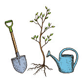 Sketch tree planting