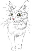 Sketch vector black lines cat with green bright realistic eyes,
