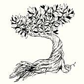 Sketched bonsai tree. vector