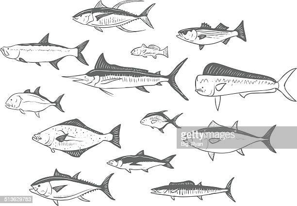 sketched fish - marlin stock illustrations, clip art, cartoons, & icons