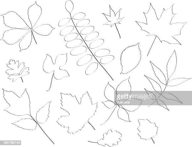 ilustrações, clipart, desenhos animados e ícones de rabiscadas conjunto de folhas - pilritreiro