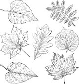 sketches of leaves