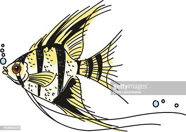 sketchy angelfish - angelfish stock illustrations, clip art, cartoons, & icons