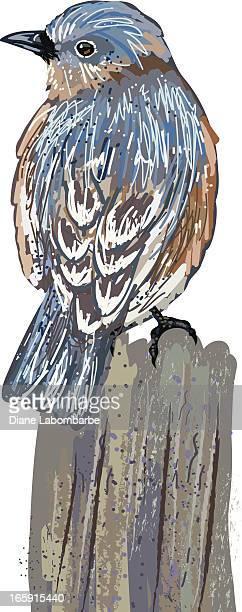Sketchy Bluebird On Stump