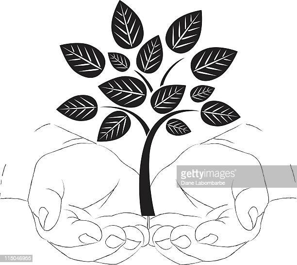 Sketchy Cupped Hands Holding a Black and White Tree