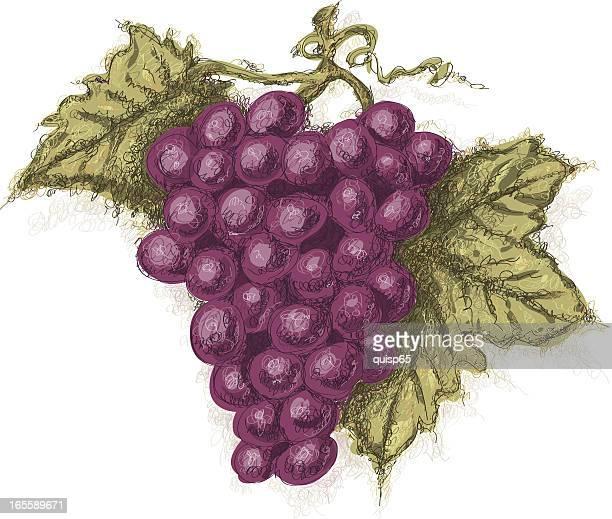 Bocetos uvas