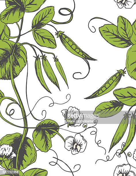 sketchy hand drawn peas seamless pattern - green pea stock illustrations