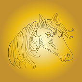 Sketchy of horse face