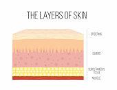 Skin layers. Healthy, normal human skin
