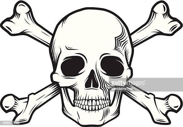 ilustraciones, imágenes clip art, dibujos animados e iconos de stock de huesos del cráneo y - femur