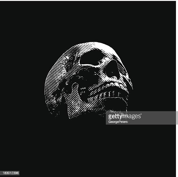 ilustrações, clipart, desenhos animados e ícones de crânio entalhes em fundo preto - raio x