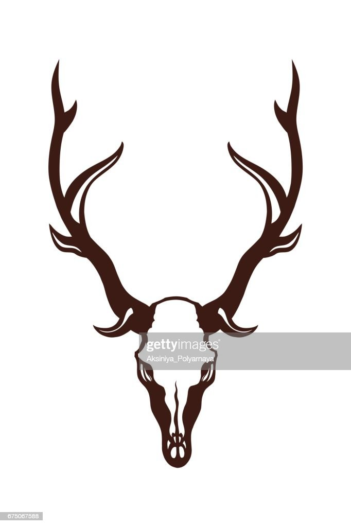Skull of a deer. Object isolated on white background. Vector illustration.