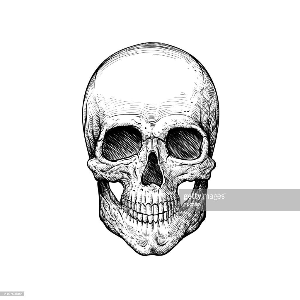 Skull sketch tattoo design. Hand drawn vector illustration