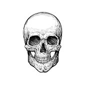 Skull sketch tattoo design. Hand drawn vector illustration