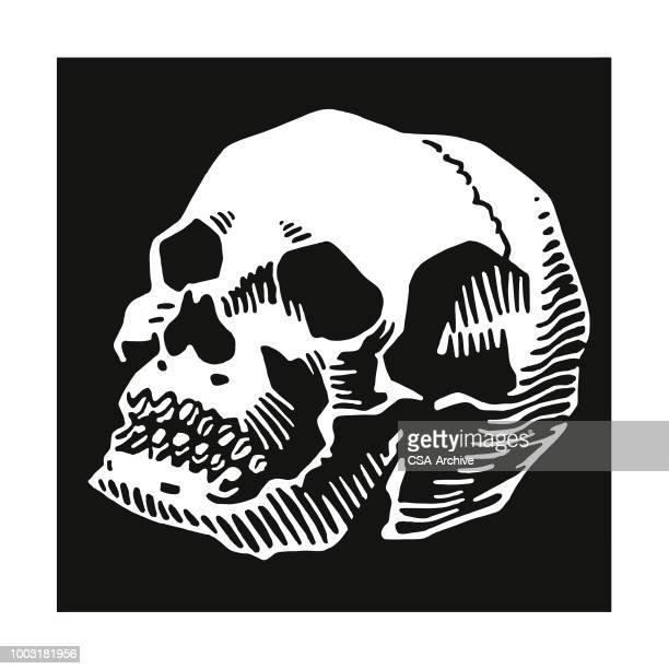 skull - human skeleton stock illustrations