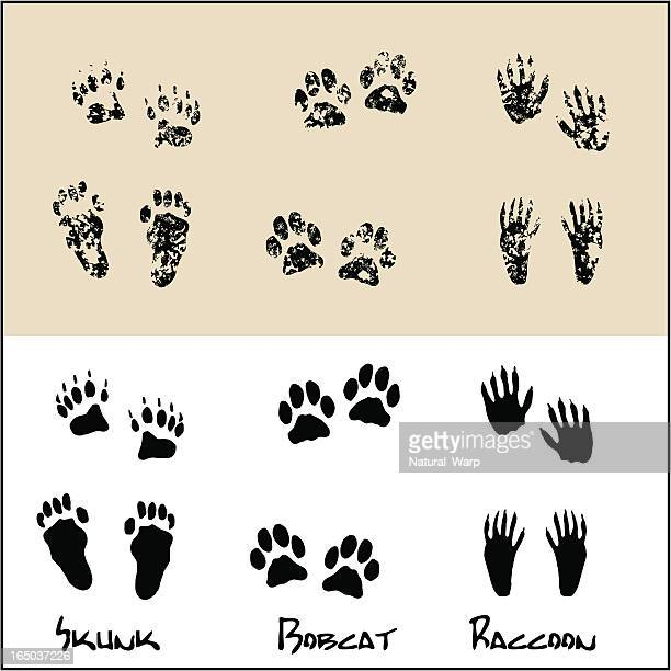 skunk - bobcat - raccoon - animal track stock illustrations, clip art, cartoons, & icons