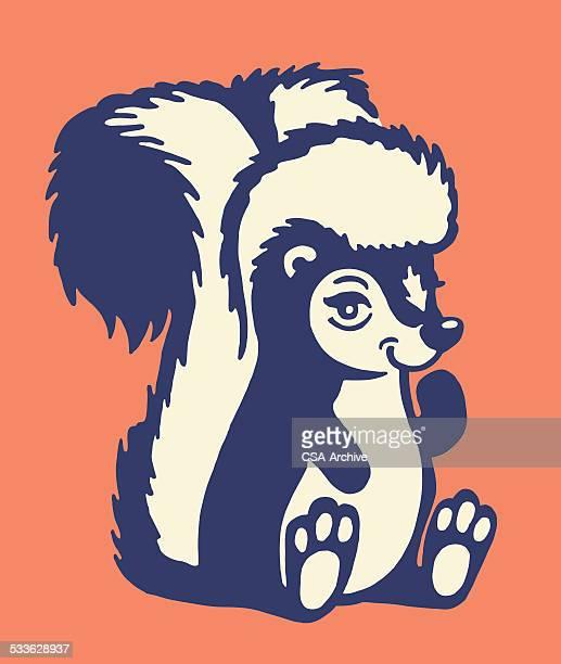 skunk - skunk stock illustrations