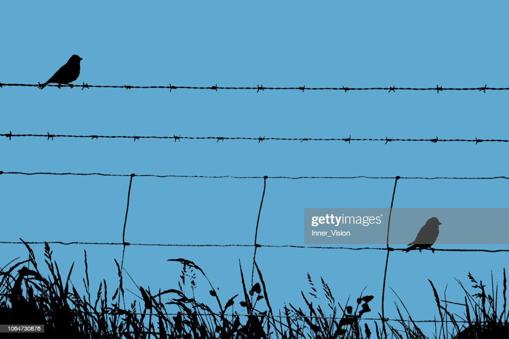 Skylarks Resting on a Barbed Wire Fence