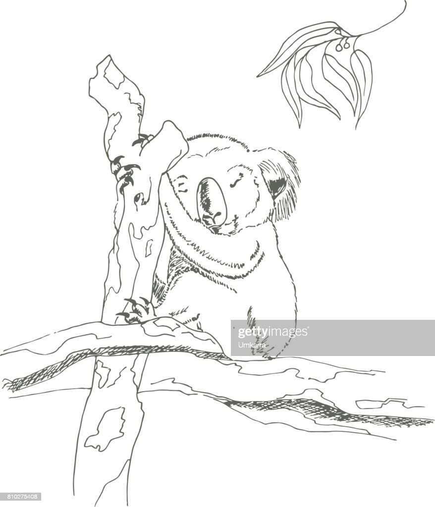 Sleeping Koala bear. Sketch marker