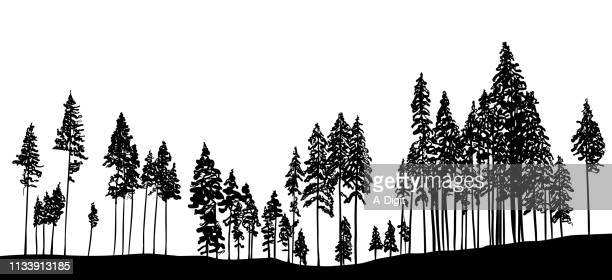 slender trees in the forest - pen and ink stock illustrations