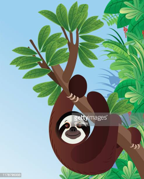 illustrations, cliparts, dessins animés et icônes de animaux de paresseux - mou