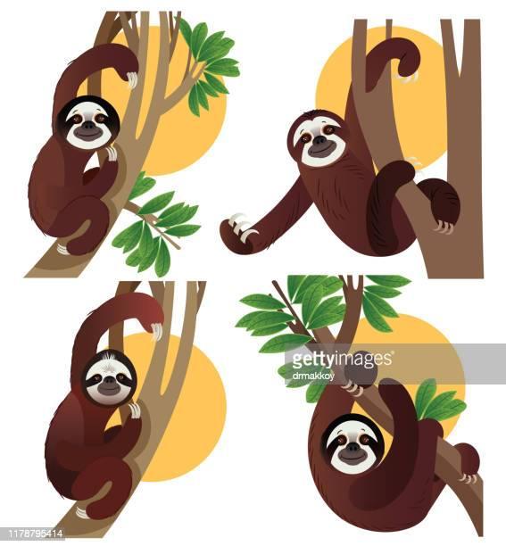 ilustrações, clipart, desenhos animados e ícones de animais do sloth na floresta húmida - libéria