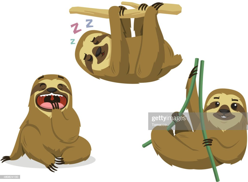 Sloth Rainforest Two Toed Lazy Mammal Hanging Sloths