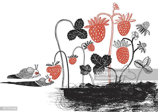 illustrations, cliparts, dessins animés et icônes de slugs et des fraises - escargot