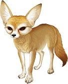 Small African fox Fennec